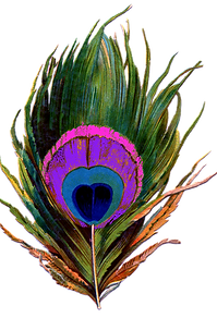 peacock-png-22909222.png