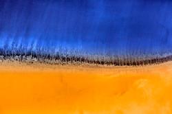 Salt trees - Variations on a Theme
