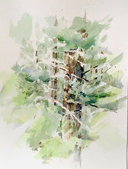 Purves - _Cedar surrounded by Spring_ 2020 16_x12_ (watercolor).jpg