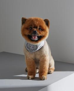 dog scarf Talent Thai