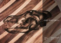 2016_Grey Wolf Skull