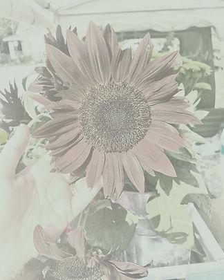 Louisville_Flower_Truck_3.jpg