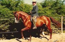 Nuno Oliveira and his Golden Horse