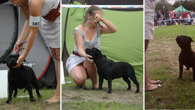 Gdynia National Dog Show 07.2012