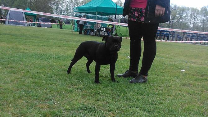 National Dog Show Dobre Miasto 01.05.2015