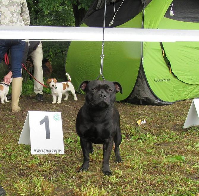 National Dog Show Gdynia 21.06.2015