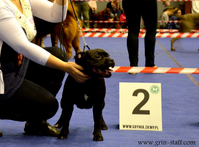 National Dog show Gdynia 10.01.2016 r.