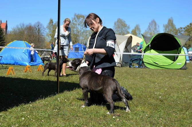 National Dog Show, Dobre Miasto 01.05.2017