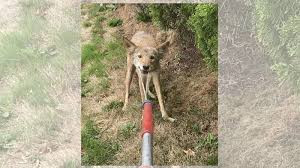 Coyotes, Cockatiels & Quohogs, Oh My