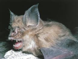 Bats In The Fight Against COVID & More Healthcare News