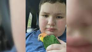 Parrot & Rabbits Found
