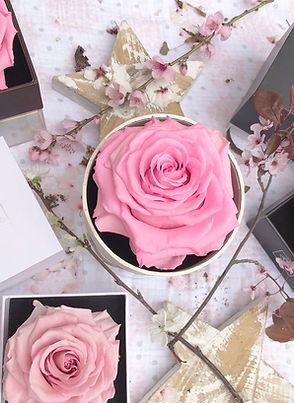 rosas-preservadas-bird-rose-spring.jpg