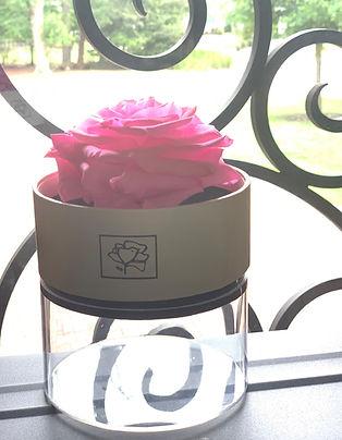 Pink Preserved rose.jpg