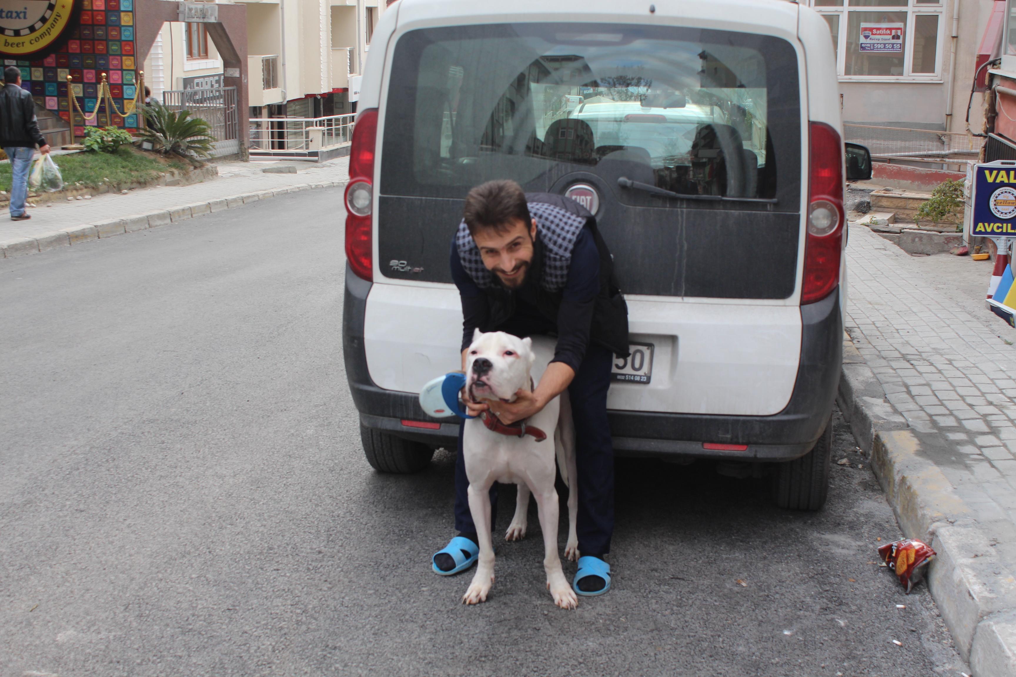 pet taksi nakil kedi köpek nakil