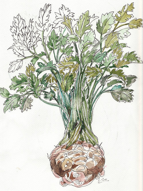 Celeriac with leaves