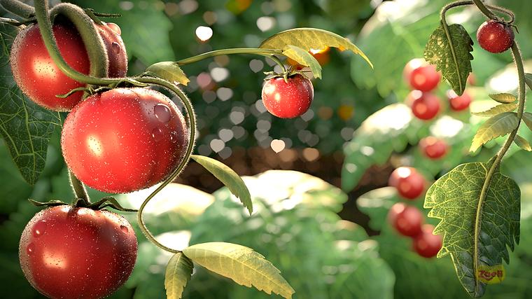 Ilustração de Animação 3D Tomates