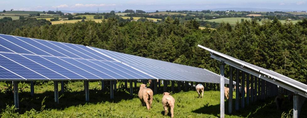 Sheep solar.jpeg