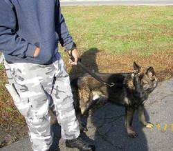 K-9 Bosco & Officer Howard