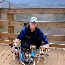 Hiking with dogs | Napa Pet Care