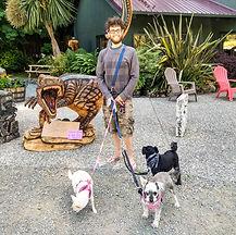 Hiking with dog | Napa Pet Care