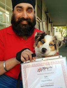 Obedience Training   Napa Pet Care