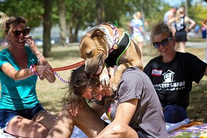 Dog Fostershare Project - 30 sierpnia 20