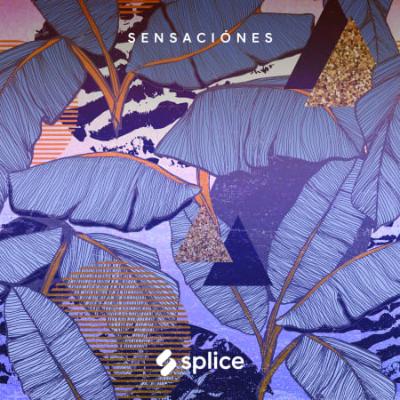 Download for free Splice Originals - Sensaciones - Latin RnB (WAV)