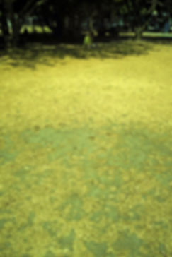 Burnt Grass 3 1080.jpg