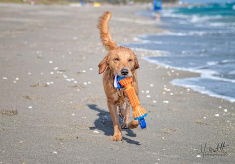 Gott Dog Photography_9849.jpg
