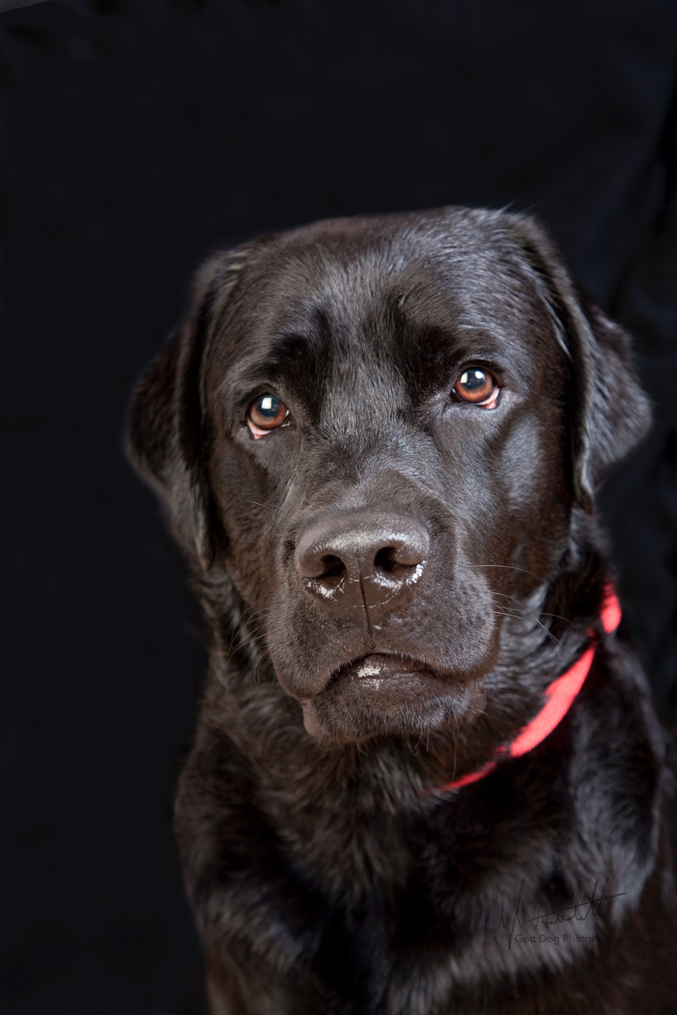 gott dog photography-9389-dog