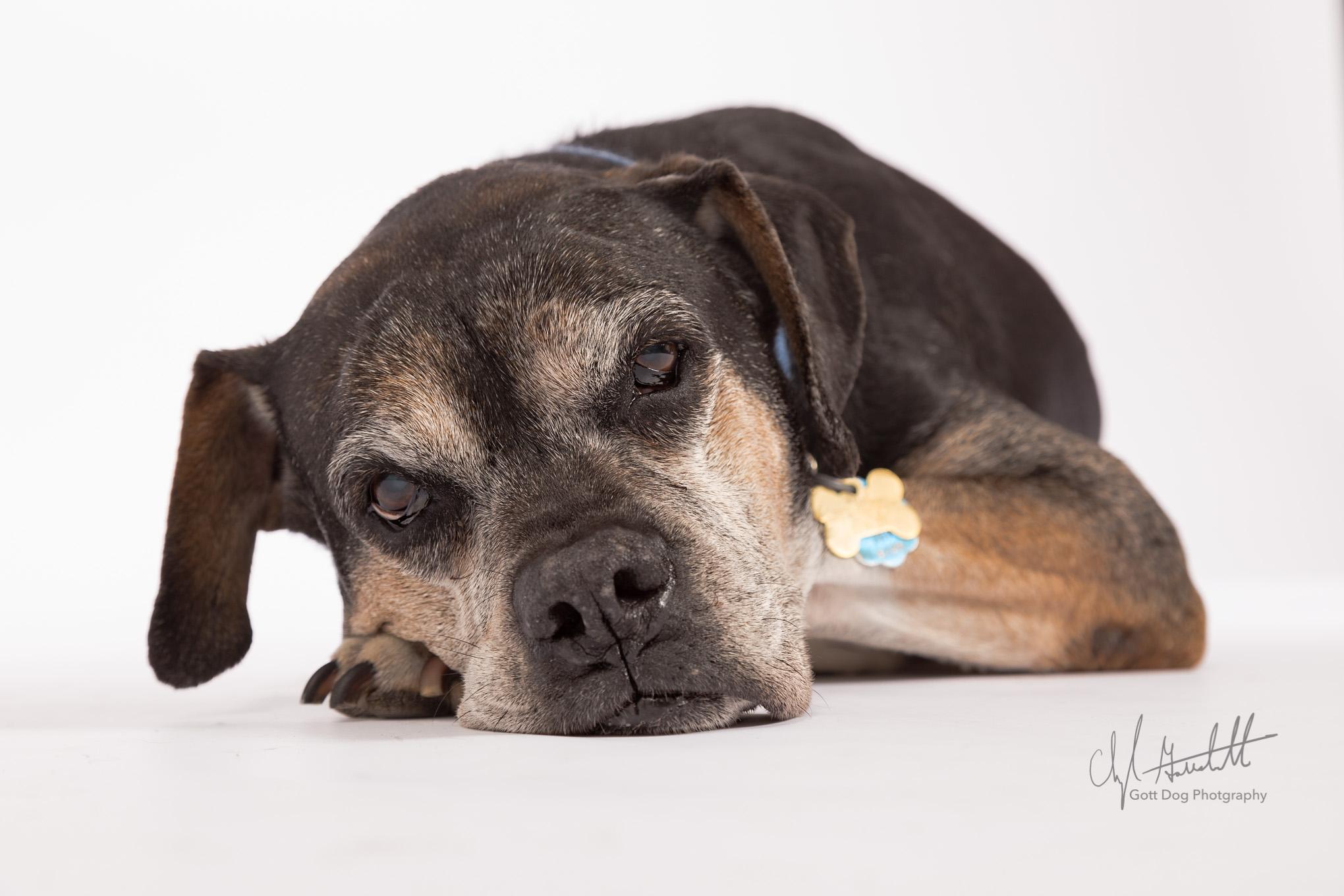 Gott-Dog-Photography-5473-Edit