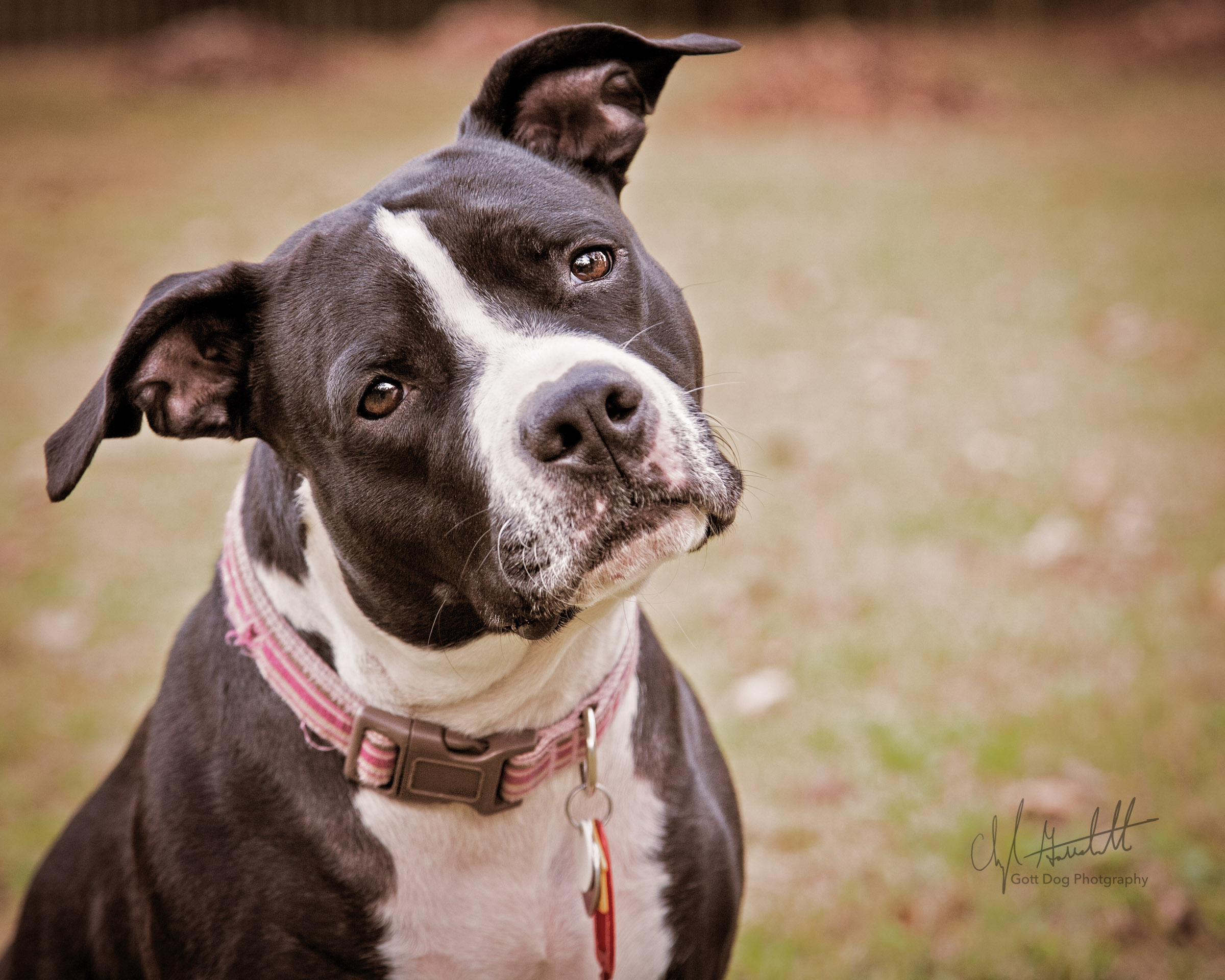 Gott Dog Photography-Rosie_2162-Edit
