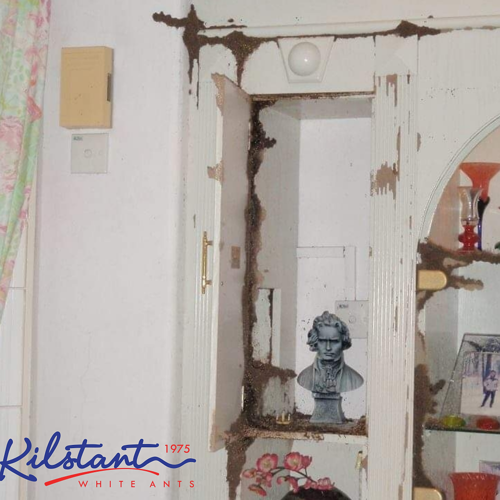 Termites Destroys Cabinets and Built-Ins in Malaysia Home