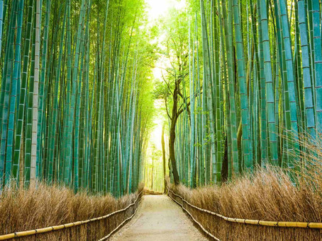 Will Termites Eat Bamboo?