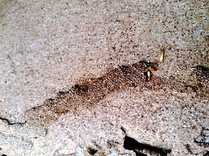 Termite signs, How do termites come in, How to spot termites in Malaysia