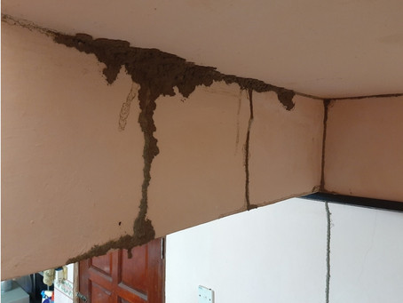 Termite Attack in Bangsar House ! Does termite attack by area?