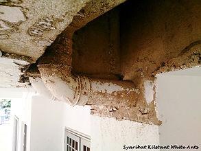 Termite Pipes