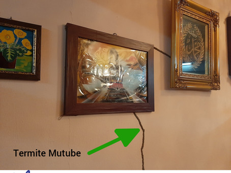 Can termites eat my beloved Picture frame?