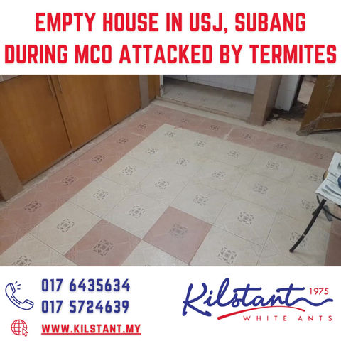 Empty House in USJ, Subang During CMCO Attacked by Termites