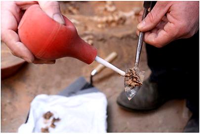 Termite Powder, Termite Dusting