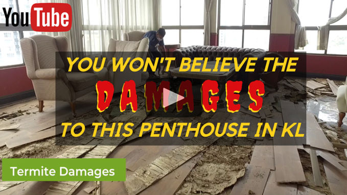 Termite Penthouse, High Rise, House Damage in Malaysia