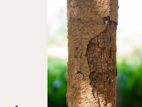Why do Termites exist in Malaysia & in the world?