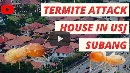 Temites USJ House.png
