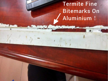 Can termites eat metal?