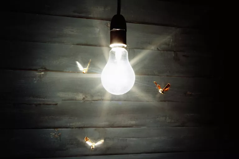 Termite Swarmers attracted to Bulb Light