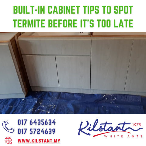 BUILT-IN CABINET TIPS TO AVOID TERMITE ISSUES FOR HOME OWNERS