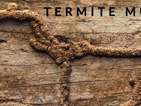 How do Termite Mud Tubes look like?