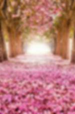 un tapis de roses.jpg