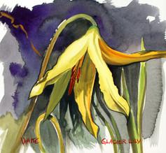 Glacier Lily.JPG