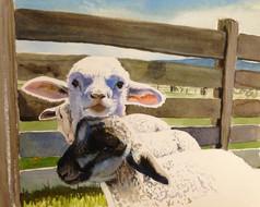 Spring Lamb 10 x12